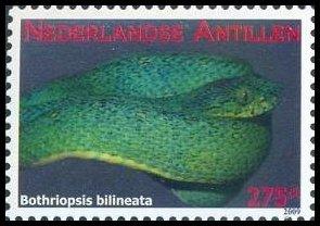 korallenschlange erythrolamprus aesculapii 420 mexican
